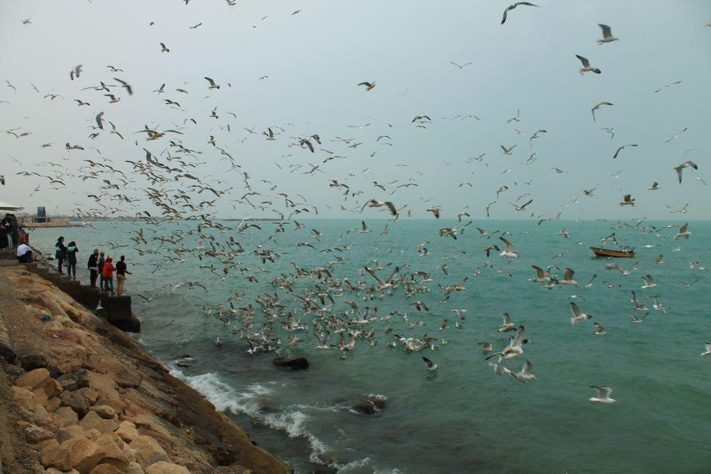 Bushehr Golfe Persique Sud Iran